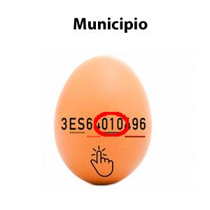 Municipio de los huevos